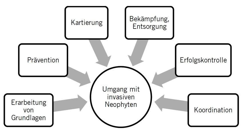 Handlungsfelder für Umgang mit invasiven Neophyten